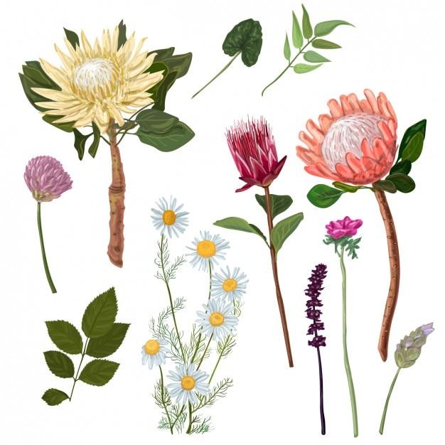 Fleurs fond d 39 aquarelle t l charger des vecteurs for Aquarelle fleurs livraison gratuite