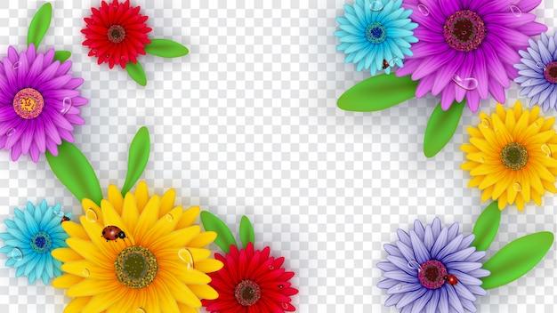 Fleurs de gerbera décorées sur fond transparent Vecteur Premium