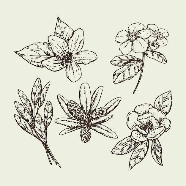 Fleurs Et Herbes Dessinées à La Main Vecteur gratuit