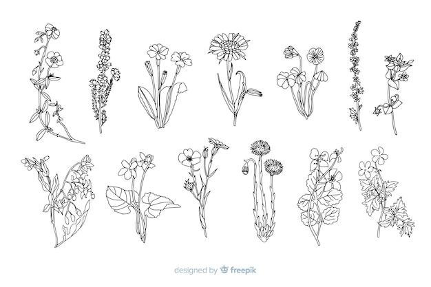 Fleurs réalistes dessinées à la main Vecteur gratuit