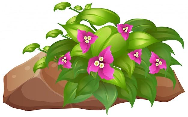 Fleurs roses avec des feuilles vertes sur blanc Vecteur gratuit