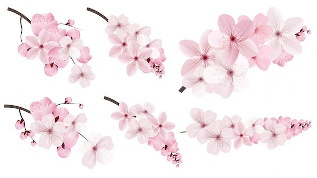 Fleurs de sakura rose foncé et clair. Vecteur Premium