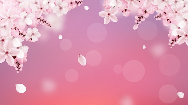Fleurs de sakura rose pâle en fleurs Vecteur Premium