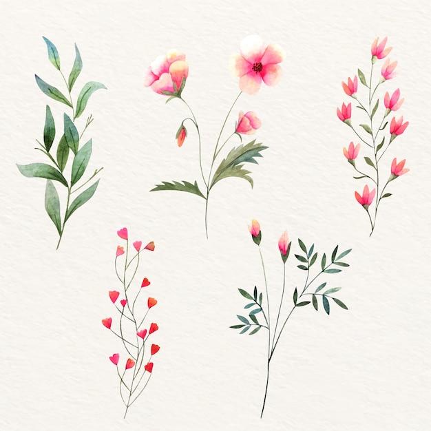 Fleurs Sauvages Aquarelles Colorées Vecteur gratuit