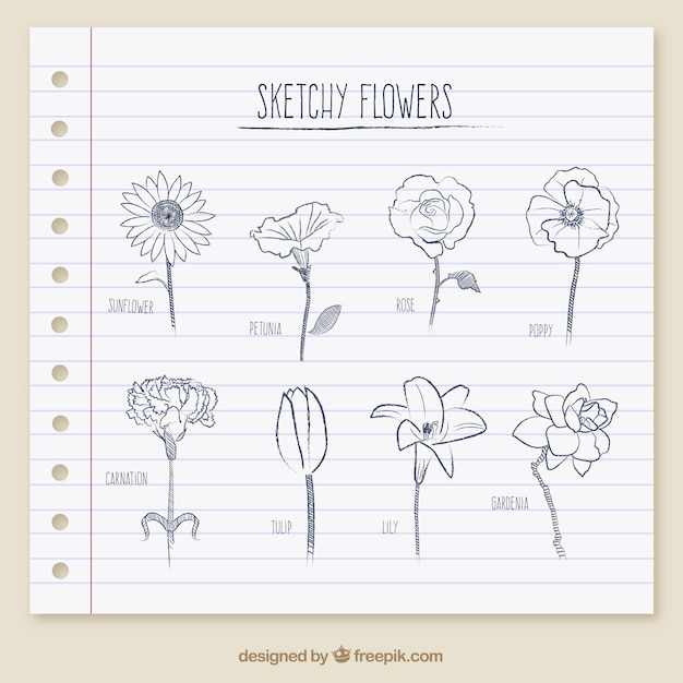 Fleurs sketchy Vecteur gratuit