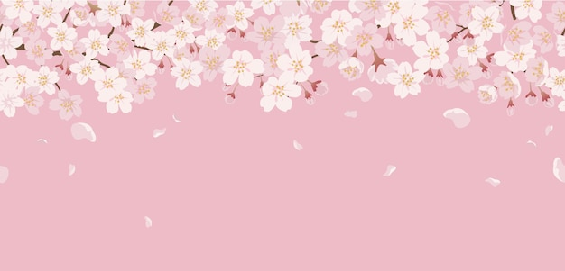 Floral Sans Couture Avec Des Fleurs De Cerisier En Pleine Floraison Sur Un Rose. Vecteur gratuit