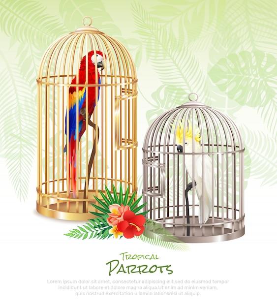 Fond d'affiche de marché aux oiseaux Vecteur gratuit