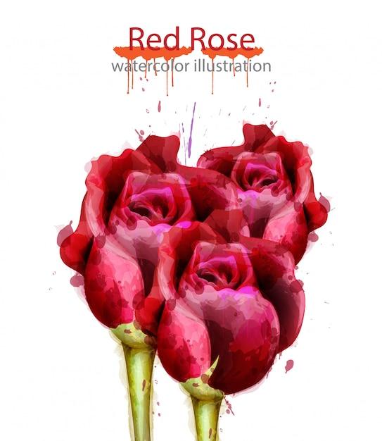Fond aquarelle de roses rouges Vecteur Premium