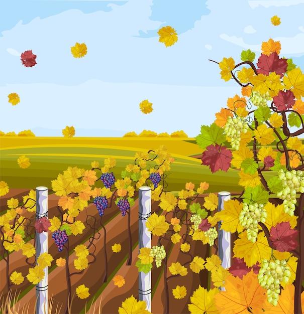 Fond d'automne vignoble Vecteur Premium