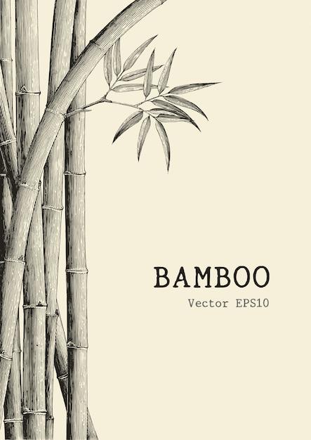 Fond De Bambou Dessin à La Main Style De Gravure Vecteur Premium