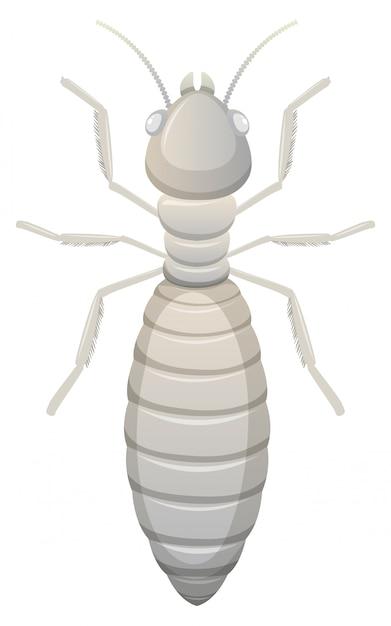 Fond blanc de termites Vecteur gratuit