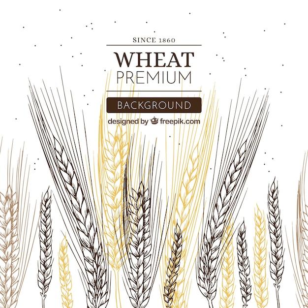 Fond de blé dessiné à la main Vecteur gratuit