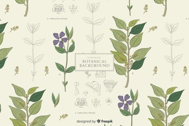 Fond botanique vintage Vecteur gratuit