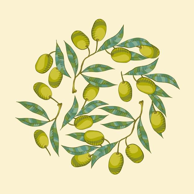Fond avec branche d'olivier et olive verte Vecteur gratuit