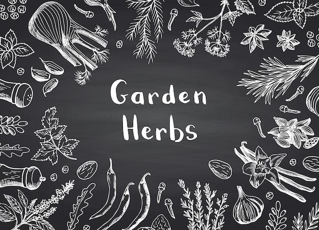 Fond de cadre herbes et épices dessinés à la main Vecteur Premium