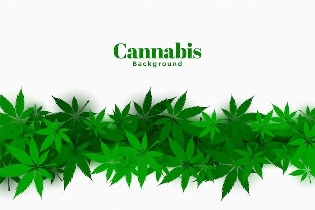 Fond De Cannabis élégant Avec Design De Feuilles De Marijuana Vecteur gratuit