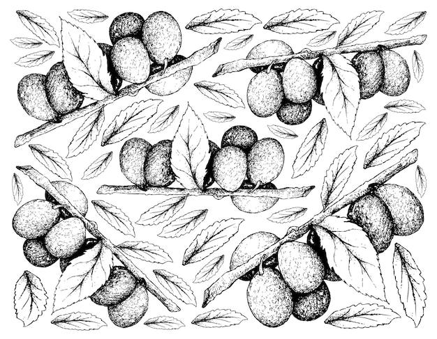 Fond Dessiné à La Main De Fruits De Prune Damson Vecteur Premium