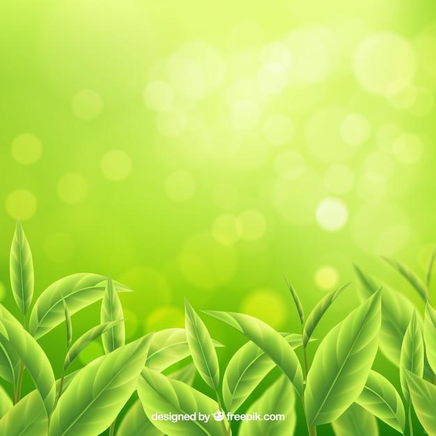 Fond de feuilles de thé dans un style réaliste Vecteur gratuit