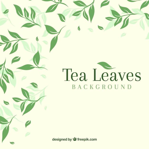 Fond de feuilles de thé avec un design plat Vecteur gratuit