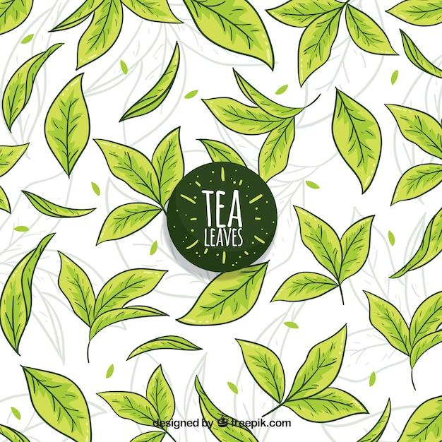Fond de feuilles de thé dessinés à la main Vecteur gratuit