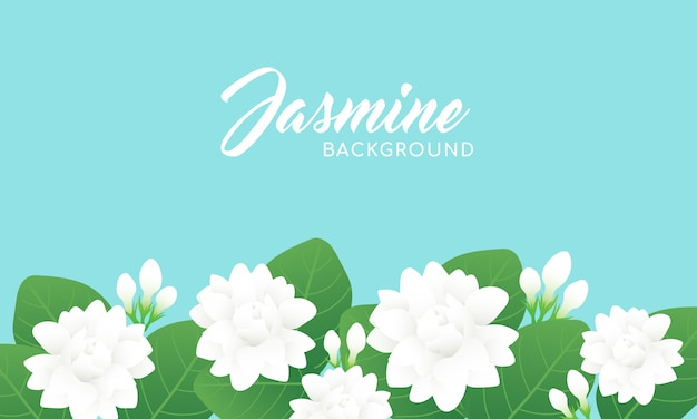 Fond de fleur de jasmin Vecteur Premium