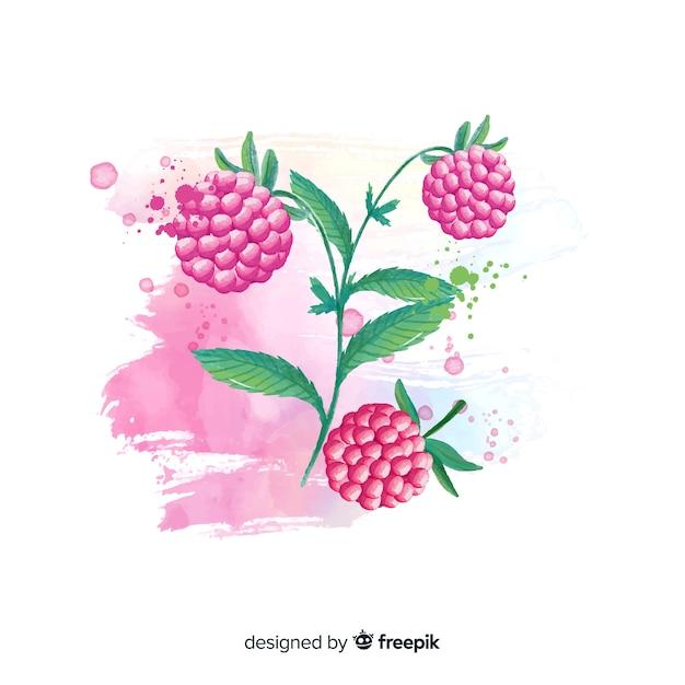 Fond De Fruits Aquarelle Aux Framboises Vecteur gratuit