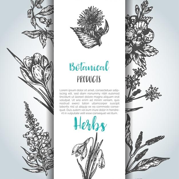 Fond d'herbes et de fleurs sauvages Vecteur Premium