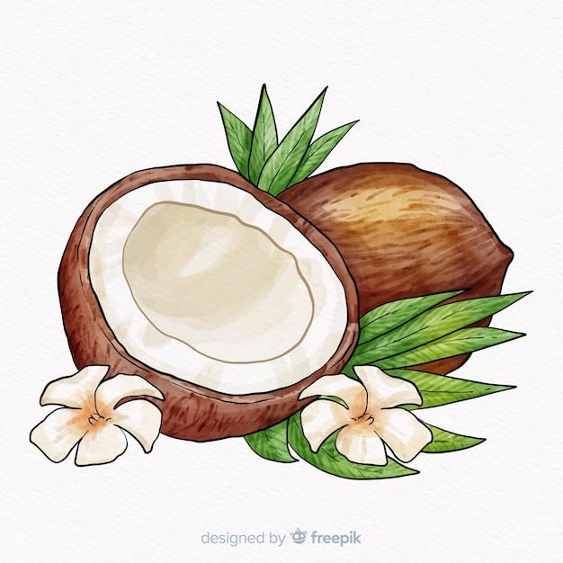 Fond de noix de coco dessiné à la main Vecteur gratuit