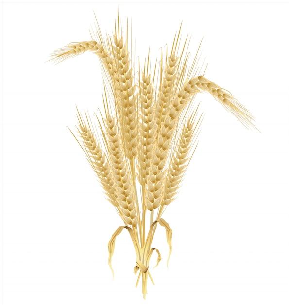 Fond rétro de blé Vecteur Premium