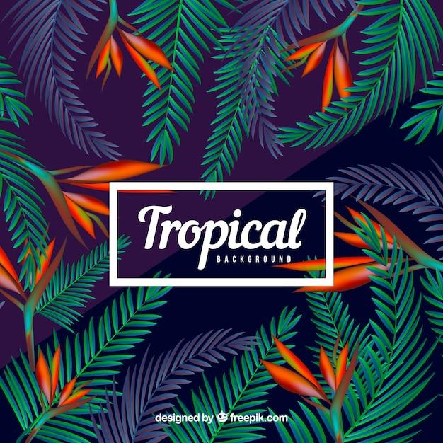 Fond tropical coloré avec un design réaliste Vecteur gratuit