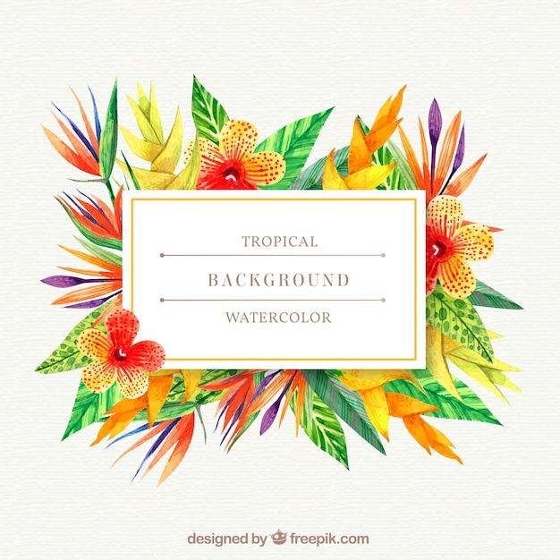 Fond tropical avec des plantes de couleurs chaudes   Télécharger des ...