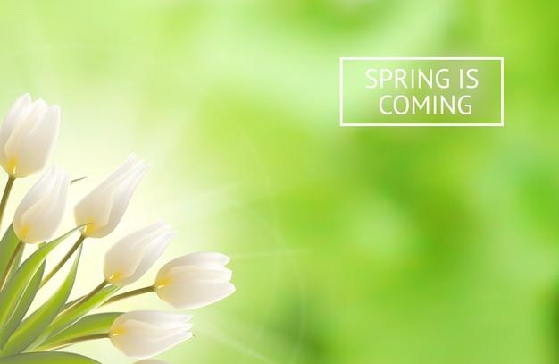Fond De Tulipe En Fleurs Vecteur gratuit