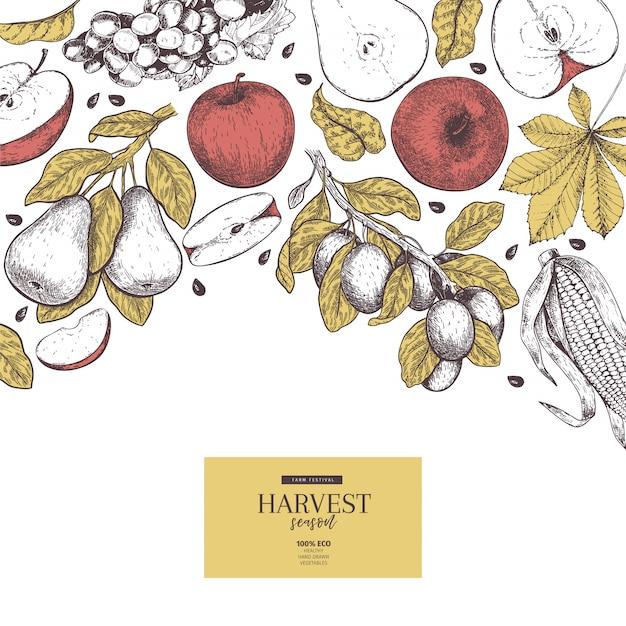 Fond de vecteur dessiné à la main avec les fruits et légumes de la récolte d'automne. Vecteur Premium