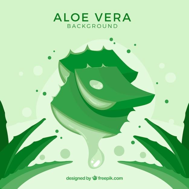 Fond vert de feuilles d'aloe vera Vecteur gratuit