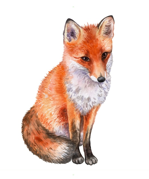 Fox isolé. aquarelle Vecteur Premium