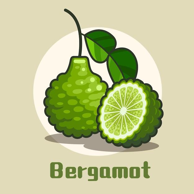 Fruits Frais De Bergamote Avec Une Tranche De Demi-cercle D'illustration De Bergamote Vecteur Premium