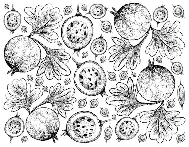 Fruits De Groseille Indiens Dessinés à La Main Vecteur Premium