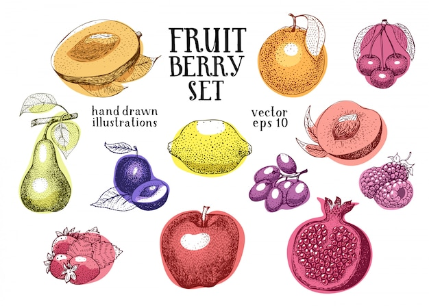 Fruits illustration vectorielle dessinés à la main Vecteur Premium