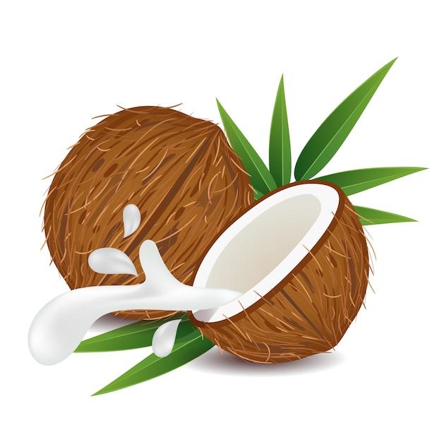 Fruits de noix de coco brunes Vecteur Premium