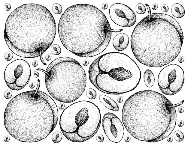 Fruits De Prune Frais Dessinés à La Main Vecteur Premium