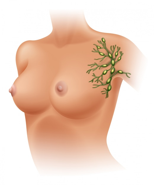 Ganglions lymphatiques axillaires Vecteur Premium