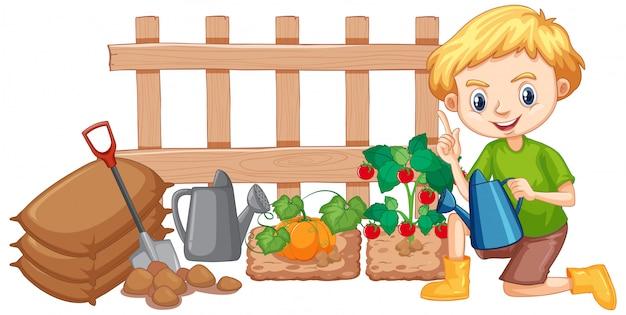 Garçon Arrosant Les Légumes Dans Le Jardin Sur Fond Blanc Vecteur gratuit