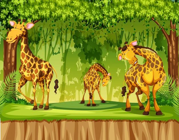 Girafe dans scène nature Vecteur gratuit