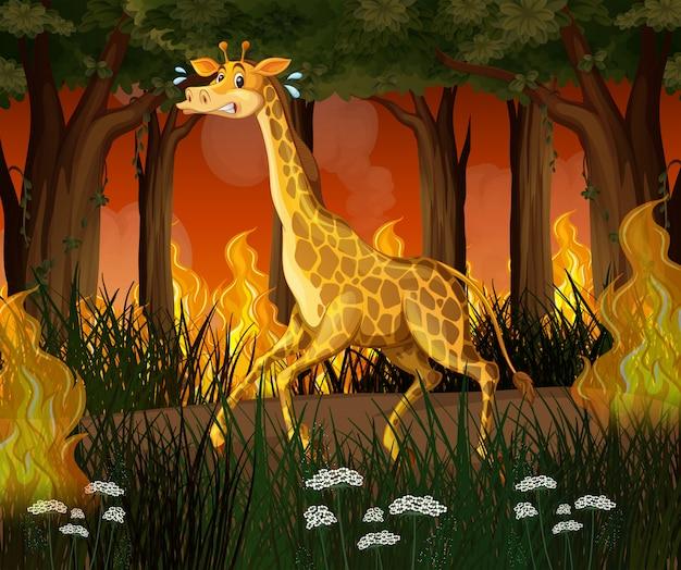 Une girafe fuyant la forêt de feux de forêt Vecteur Premium