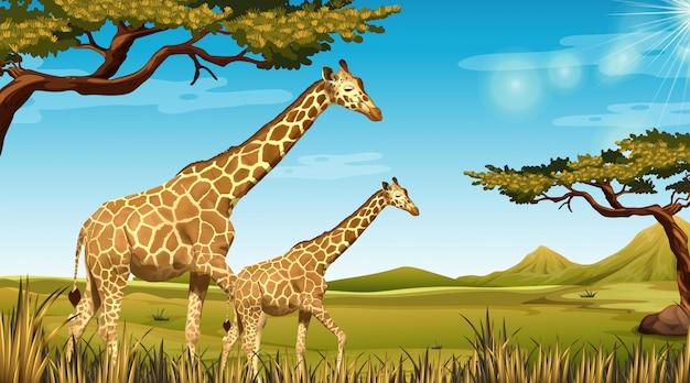 Girafes dans un paysage africain Vecteur gratuit