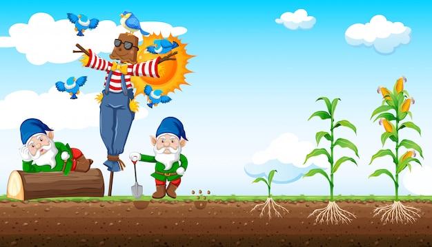 Gnomes Et Style De Dessin Animé D'épouvantail Avec Ferme De Maïs Et Fond De Ciel Vecteur gratuit
