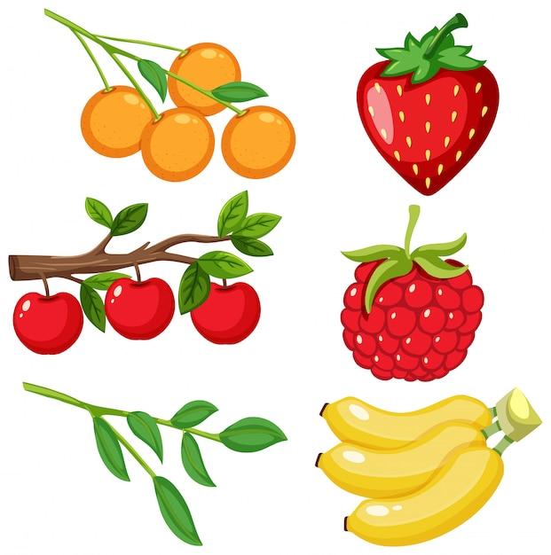 Grand Ensemble De Différents Types De Fruits Sur Fond Blanc Vecteur Premium