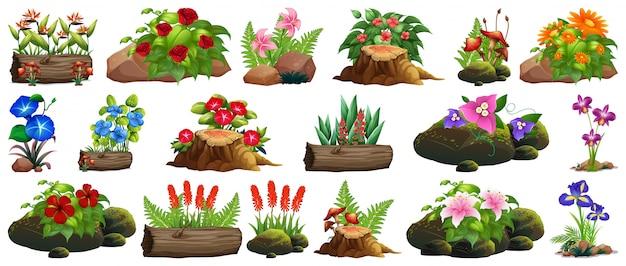 Grand ensemble de fleurs colorées sur les rochers et le bois Vecteur gratuit