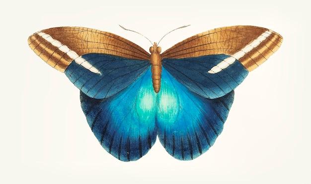 Grand papillon occidental dessiné à la main Vecteur gratuit