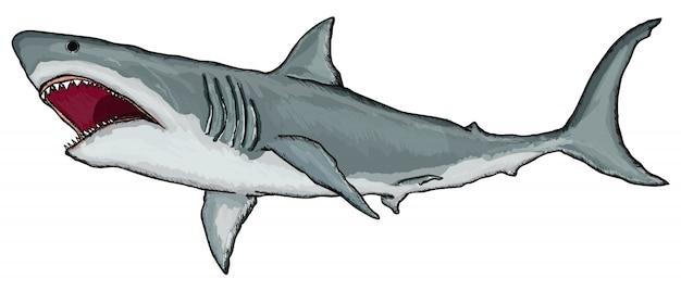 Grand requin blanc Vecteur Premium